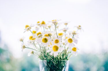 regalare fiori online