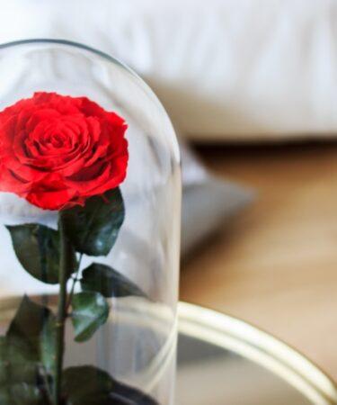 rosa rossa sotto campana di vetro